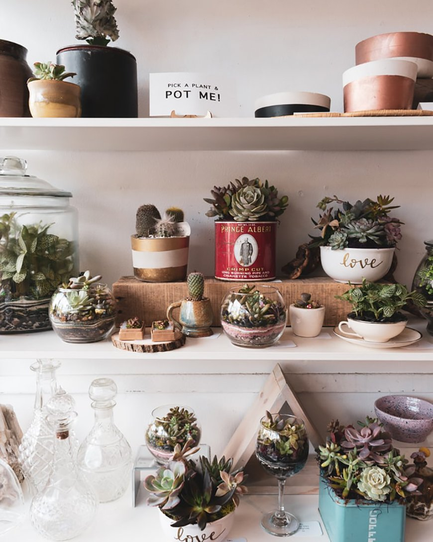 Eco-Friendly Wedding Favours - Succulent plants | CHWV