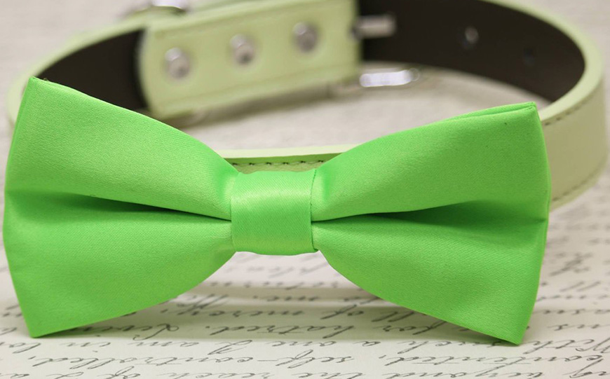Wedding Ideas By Pantone Colour: Lime Punch - Dog collar | CHWV