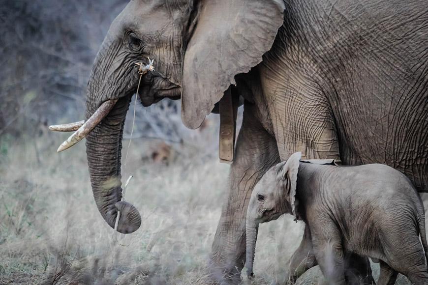 Unique Stag Party Ideas - Animal safari | CHWV