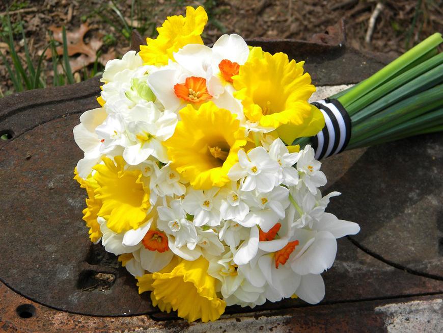 Wedding Ideas by Colour: Cream Wedding Flowers - Narcissus | CHWV
