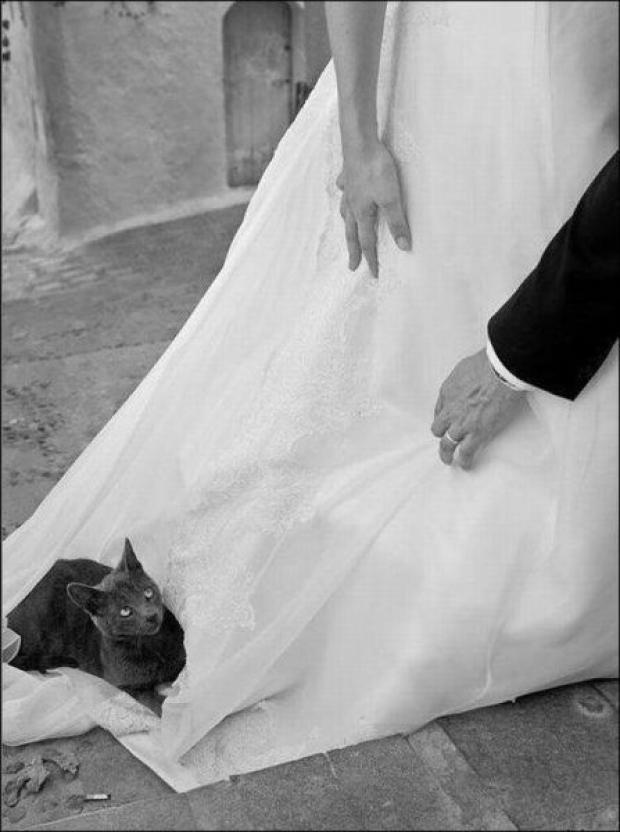 19 Times that Cats Made Weddings Infinitely Better   CHWV