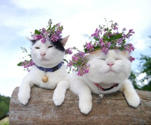 19 awesome cats at wedding chwv 19 times that cats made weddings infinitely better chwv junglespirit Images