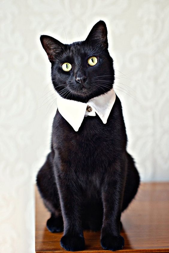 19 awesome cats at wedding chwv 19 times that cats made weddings infinitely better chwv junglespirit Gallery