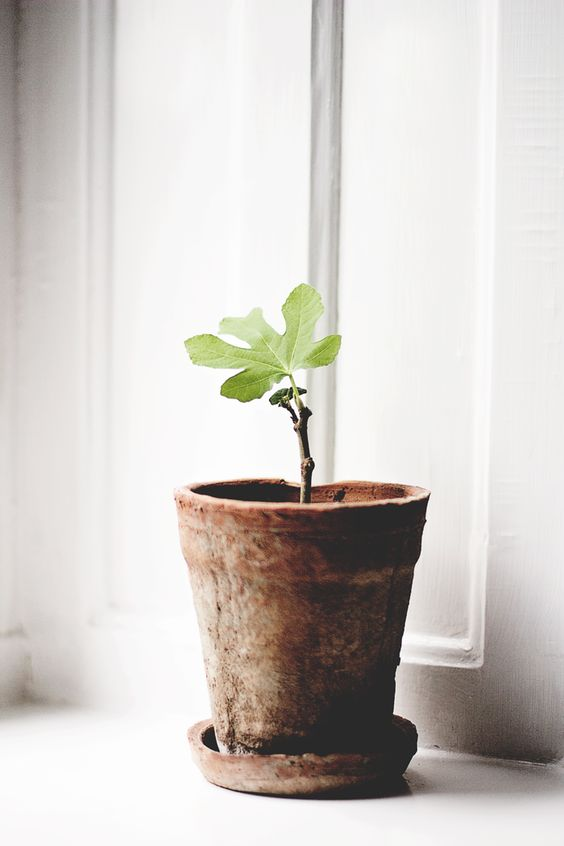 Wedding gift ideas: For the bride - Plant a tree | CHWV