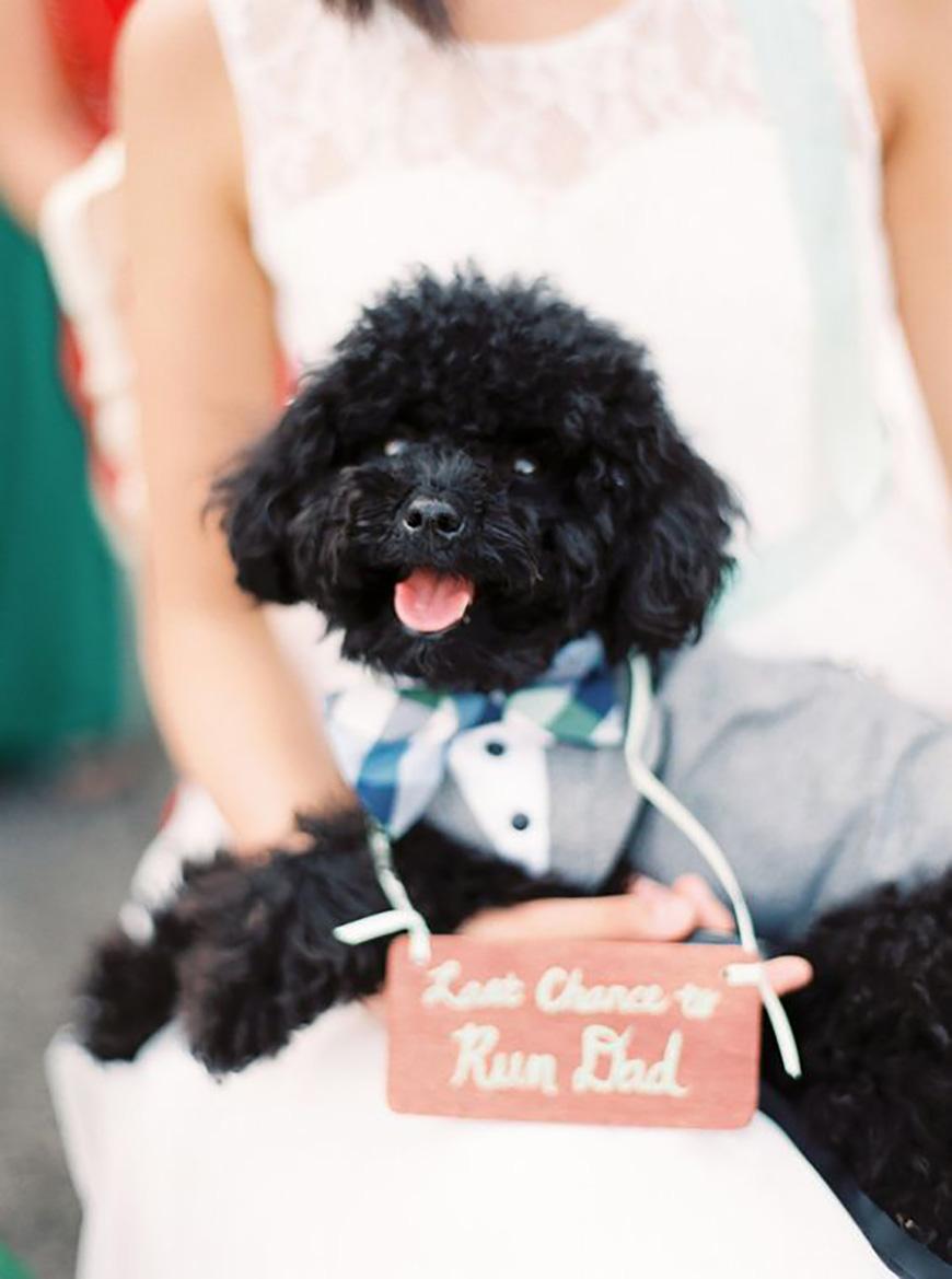 25 Jaw Dropping Wedding Ideas - Puppy love | CHWV