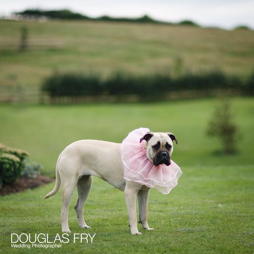 Pets At Weddings | CHWV