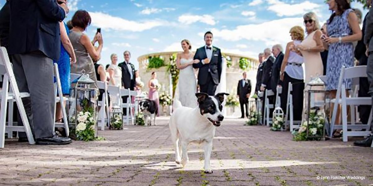 17 Reasons Why Your Dog Should Be At Your Wedding | CHWV