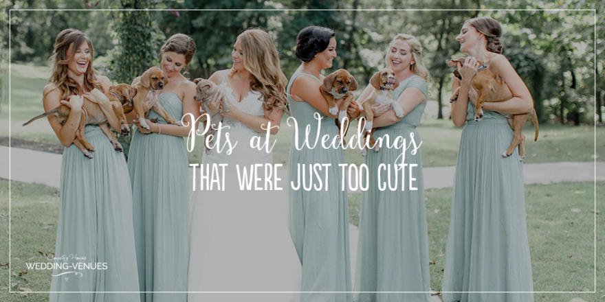 Pets At Weddings | CHWV