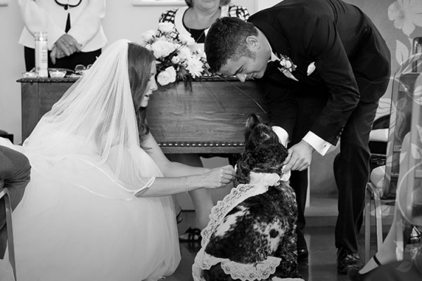 Family dog helping with the wedding ceremony at Fontwell Park