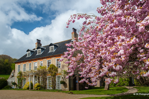 Beautiful blossom tree in the grounds at Sedgeford Hall